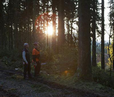 Mitarbeiter des Forstbetriebes begehen ein Waldstück
