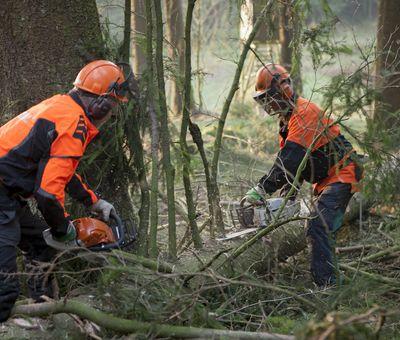Mitarbeiter des Forstbetriebes schneiden Äste an einem Baum ab