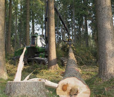 Nutzholz wird zerkleinert
