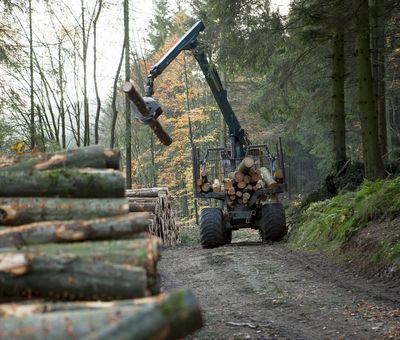 Ein Baumstamm wird transportiert